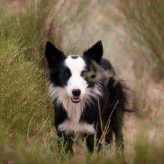 gallery-dog.jpg